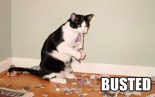 lolcat-busted